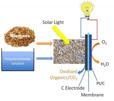Biomass fuel cell