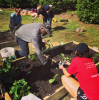 Community Graden Cultivated by Business Services